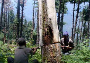 बिहार सरकार ने पेड़ों की कटाई को रोकने के लिए उठाया यह कदम, जानें