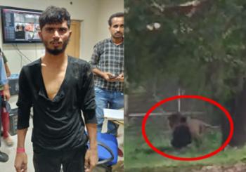 बिहार: दिल्ली के चिड़ियाघर में शेर के बाड़े में कूदा शख्स, वायरल हुआ वीडियो