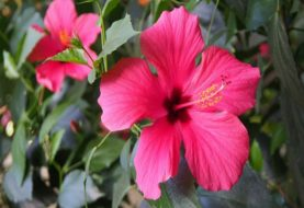 बिहार सरकार की बड़ी पहल, फूल-पौधों के नाम पर रखे जाएंगे चौक-मोहल्लों के नाम